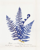 Wild Apple Portfolio - Botanical Fern IV Blue Light