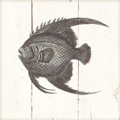 Wild Apple Portfolio - Fish Sketches IV Shiplap