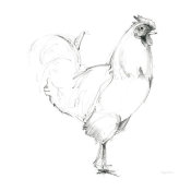 Avery Tillmon - Rooster II Dark Square