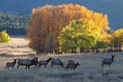 Vic Schendel - Fall Morning with Elk