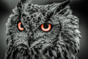 European Master Photography - Wise Owl 5 black & white