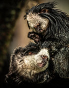 European Master Photography - Little Cute Monkeys