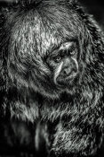 European Master Photography - Little Monkey 4 black & white