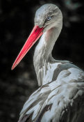 European Master Photography - The Stork 7