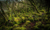 European Master Photography - Mossy Forest 4