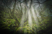 European Master Photography - Mossy Forest 5