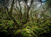 European Master Photography - Mossy Forest 6