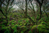 European Master Photography - Mossy Forest 7