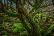 European Master Photography - Mossy Forest 8