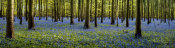European Master Photography - Fairytale Forest Panorama