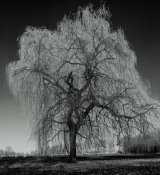 European Master Photography - Willow
