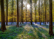 European Master Photography - Fairytale Forest Sunlight