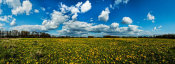 European Master Photography - Yellow Flower field