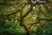 European Master Photography - Maple tree