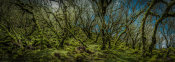 European Master Photography - Mossy forest Panorama