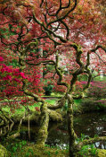 European Master Photography - Japanese Garden Tree
