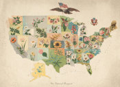 US State Flower Map Company - Our National Bouquet, 1911