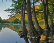 Tim Fitzharris - Bald Cypress trees in river, Frio River, Old Baldy Mountain, Garner State Park, Texas