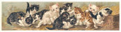 Unknown 19th Century American Lithographer - Yard of Cats, 1895