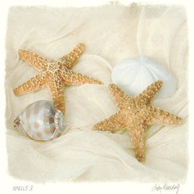 Judy Mandolf - Shells III