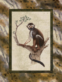 Janet Kruskamp - Squirrel Monkey