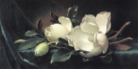Martin Johnson Heade - Magnolia Blossom On Blue Velvet