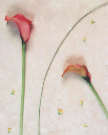 James Guilliam - Calla Solitaire