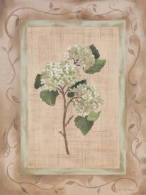 Paige Houghton - Country Hydrangea