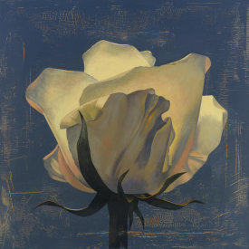 Curtis Parker - Glowing White Rose