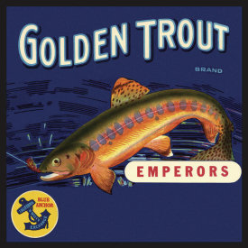 The Miles Graff Collection - Golden Trout
