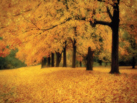 M. Ellen Cocose - Gold of Autumn West