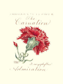 Constance Lael - January's Flower, The Carnation