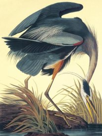 John James Audubon - Great Blue Heron