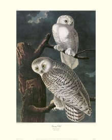 John James Audubon - Snowy Owl (decorative border)