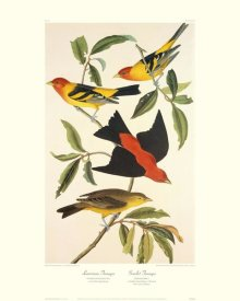 John James Audubon - Louisiana Tanager, Scarlet Tanager (decorative border)
