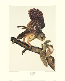 John James Audubon - Barred Owl (decorative border)