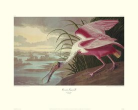 John James Audubon - Roseate Spoonbill (decorative border)