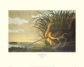John James Audubon - Long-Billed Curlew (decorative border)