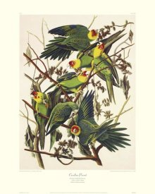John James Audubon - Carolina Parrot (decorative border)