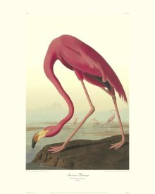 John James Audubon - American Flamingo (decorative border)
