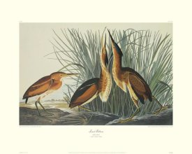 John James Audubon - Least Bittern (decorative border)