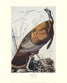 John James Audubon - Wild Turkey (decorative border)