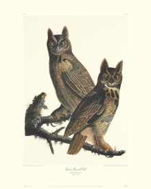 John James Audubon - Great Horned Owl (decorative border)