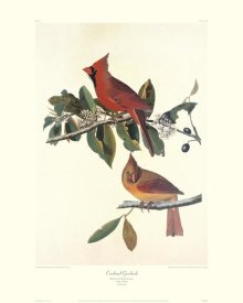 John James Audubon - Cardinal Grosbeak (decorative border)