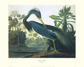 John James Audubon - Louisiana Heron (decorative border)