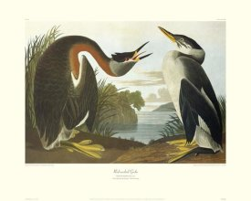 John James Audubon - Red-Necked Grebe (decorative border)