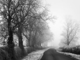 Stephen Rutherford-Bate - Misty Tree-Lined Road