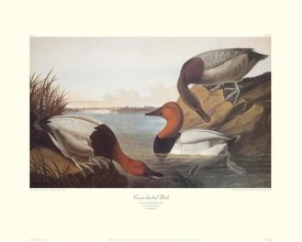 John James Audubon - Canvas-Backed Duck (decorative border)