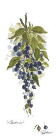 Peggy Abrams - Blueberries