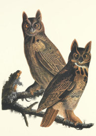 John James Audubon - Great Horned Owl
